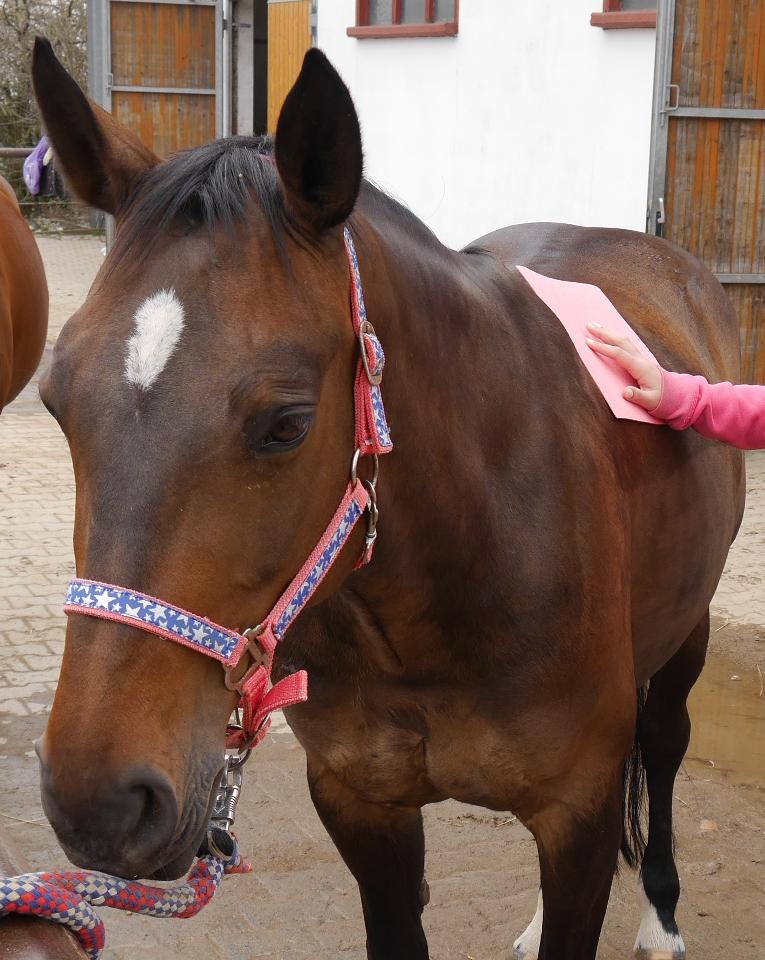 Schwammtuch für die Pferdepflege